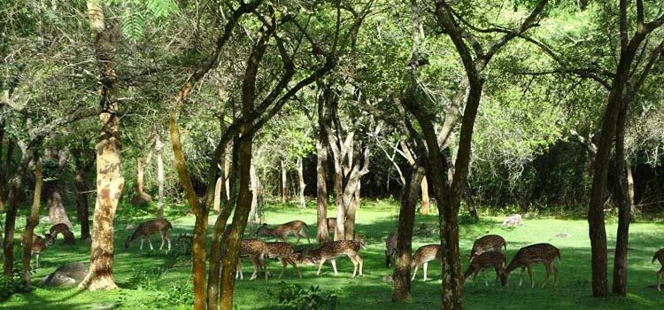 KOTAGARH WILDLIFE SANCTUARY